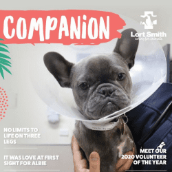 Companion Autumn 2021